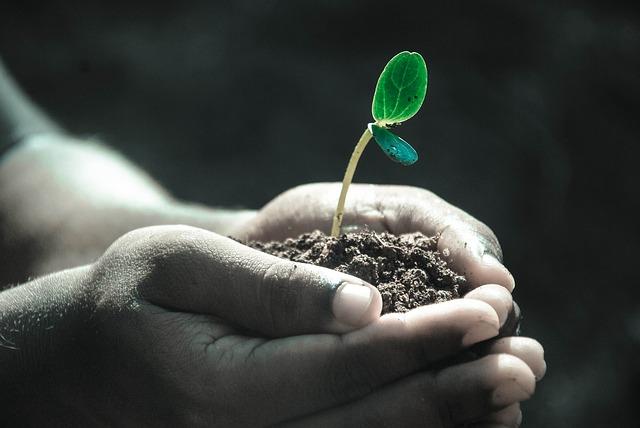 rostlina v dlani