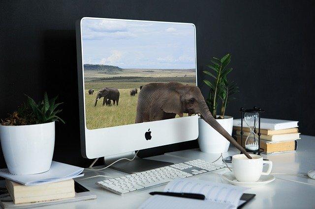 slon na monitoru