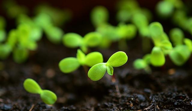 mladé rostlinky v půdě.jpg